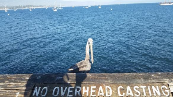 Pier life. I'm pretty sure if this pelican opened its mouth, people would try to throw a quarter in it.