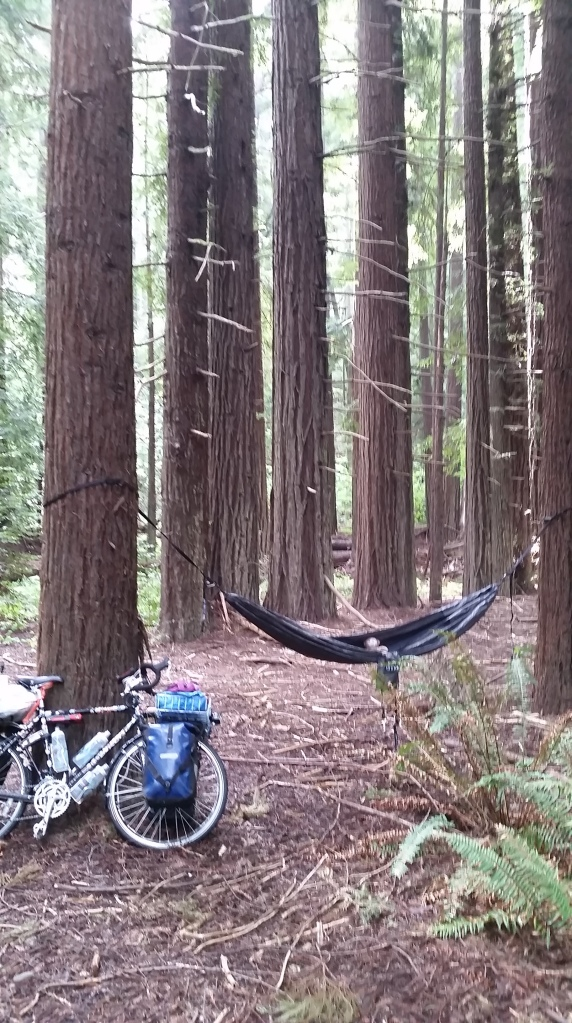 Hammock time in the redwoods.