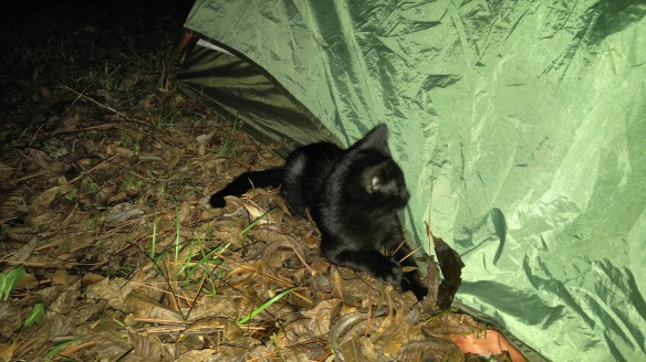 Kitten and tent