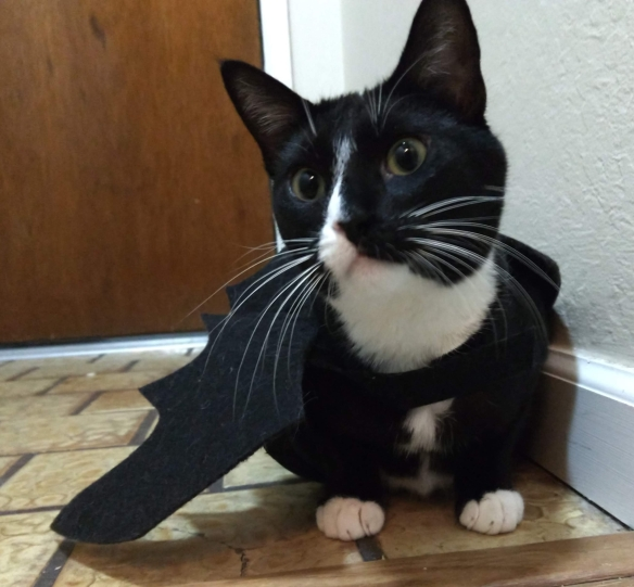 Tuxedo cat Snowball wearing bat wings